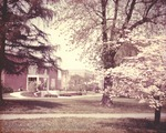 Bridgewater College, Alexander Mack Memorial Library on left, Bowman Hall center, and blooming dogwood, 1970s by Bridgewater College