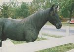 Bridgewater College, Sarah La Charite's photograph of a horse at College Farm, late 1980s by Sarah La Charite