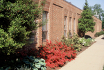 Azaleas in front of Nininger Hall by L. Michael Hill Ph.D.