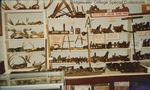 Bridgewater College, Thelma Replogle (photographer), Taxidermy and tool wall in the Reuel B. Pritchett Museum, September 1988 by Thelma Replogle