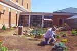 07. Dr. Hill planting shrubs near the greenhouse. by L. Michael Hill Ph.D.