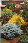 15. Showcasing color contrast by L. Michael Hill Ph.D.