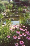 16. This shows how the garden and the pond came together by L. Michael Hill Ph.D.
